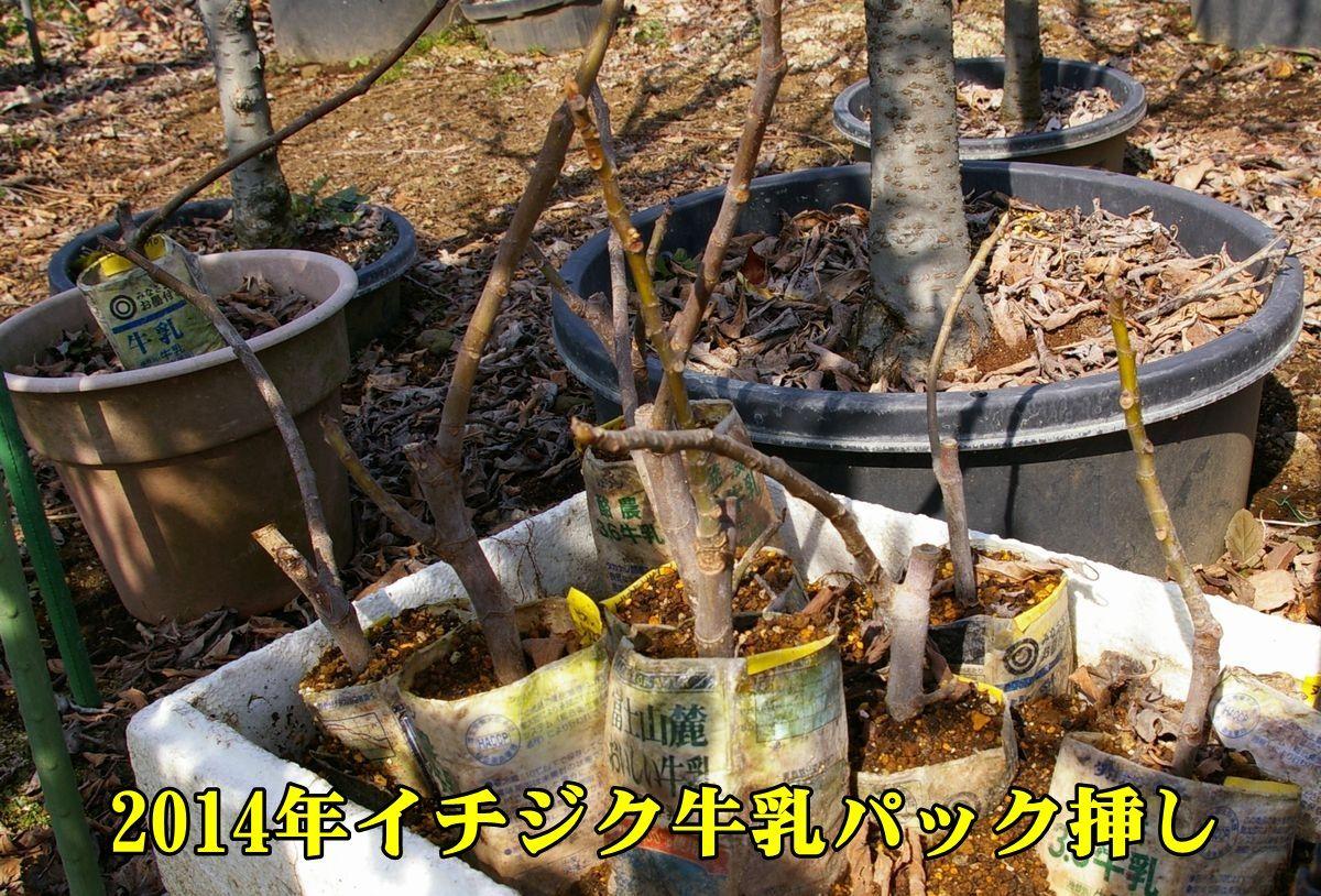 1S_itijik0216_0c1.jpg