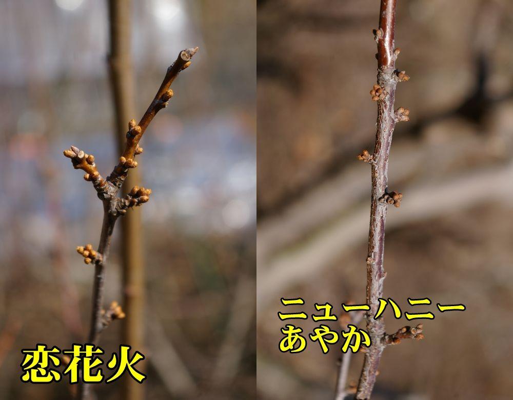 1S_koi_newh0213_0c1.jpg