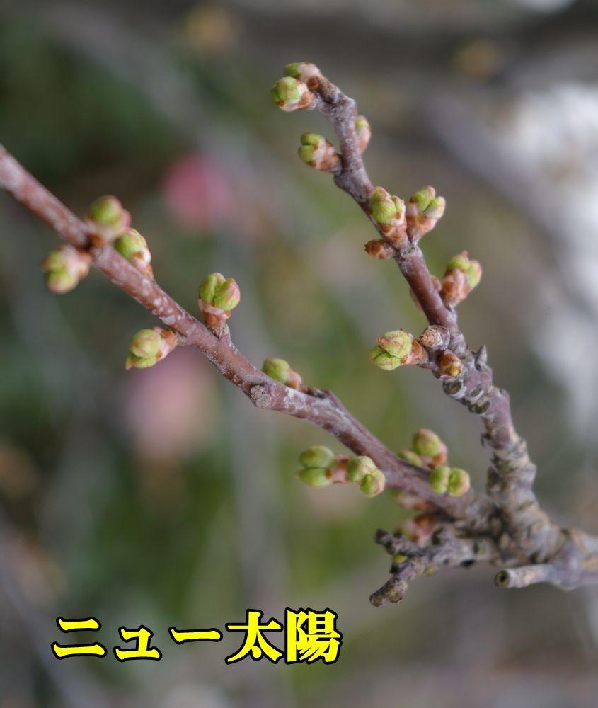 1S_newtaiyo0306_0c1.jpg