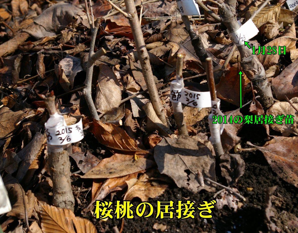 1S_orihime0206c1.jpg