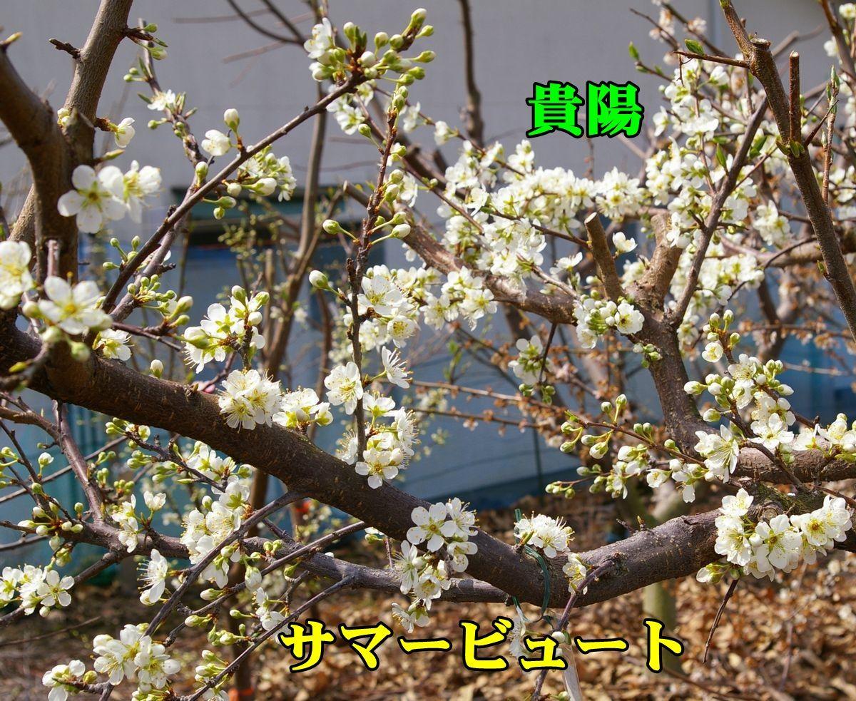 1S_sam_byu150318_035.jpg