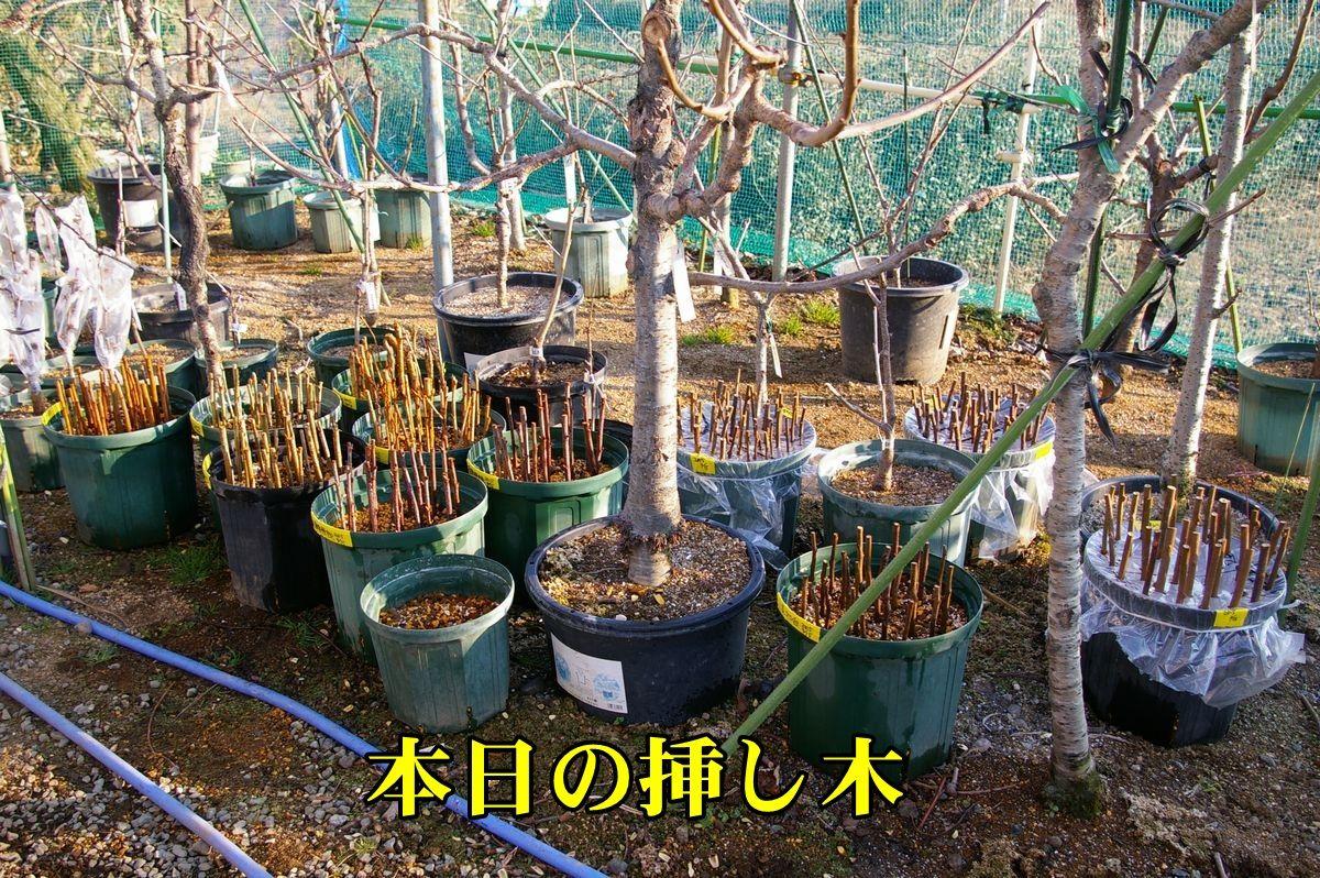 1S_sasiki0215_0c1.jpg