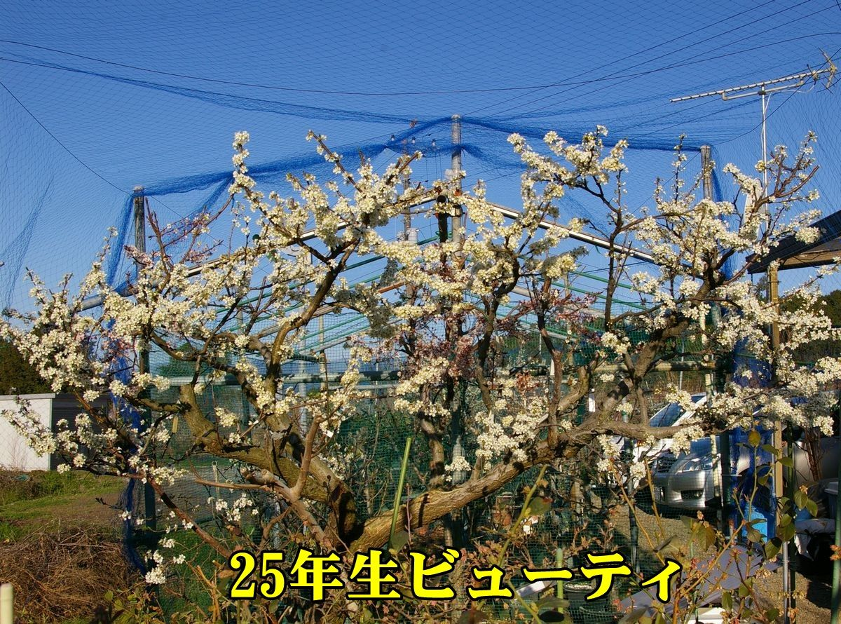 1S_sumomo150324.jpg