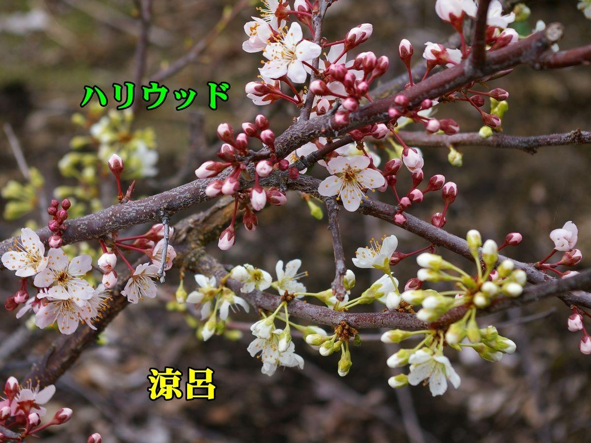 1S_suzuHR01c1.jpg