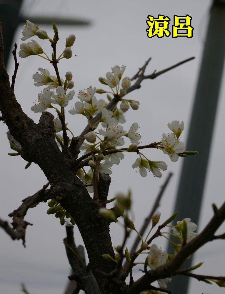 1S_suzuro0101_0c1.jpg