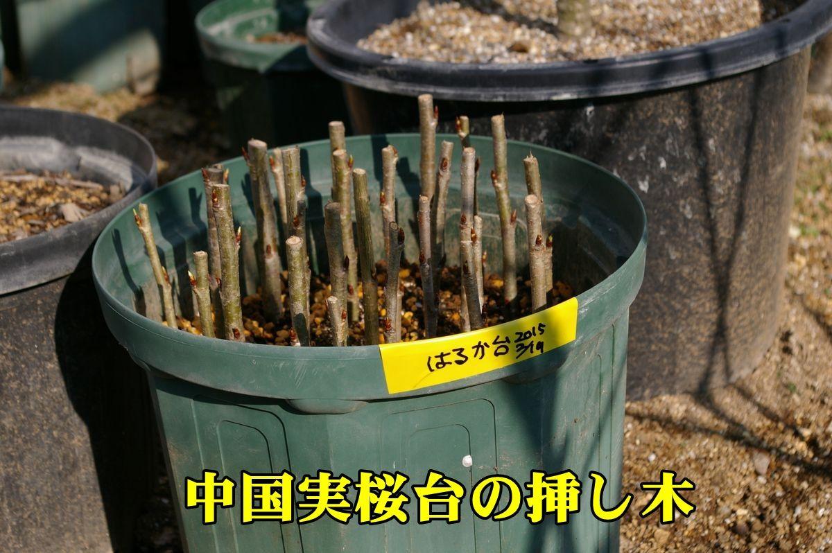 1T_haruka0219_0c1.jpg