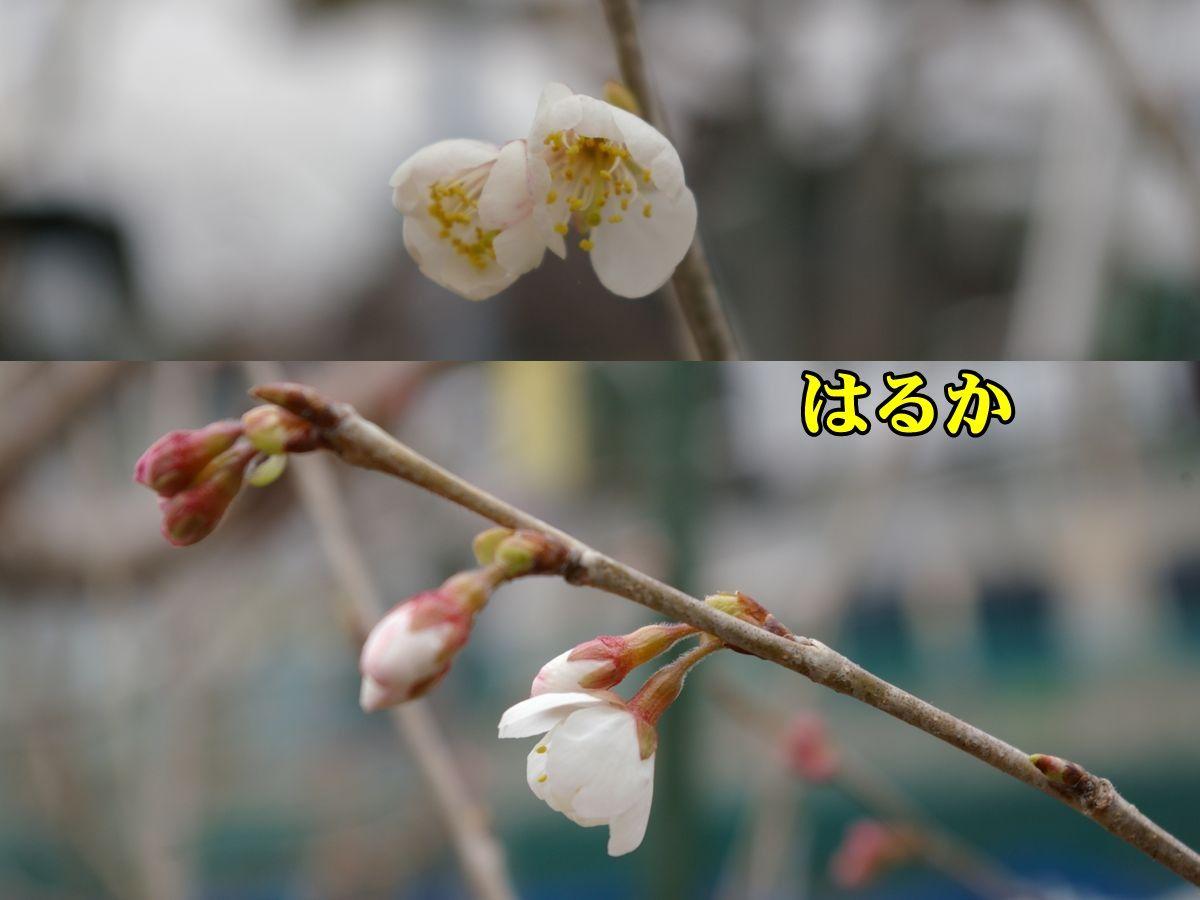 1T_haruka0303_0c1.jpg