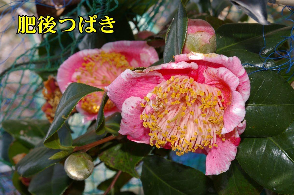 1T_higo0207c1.jpg