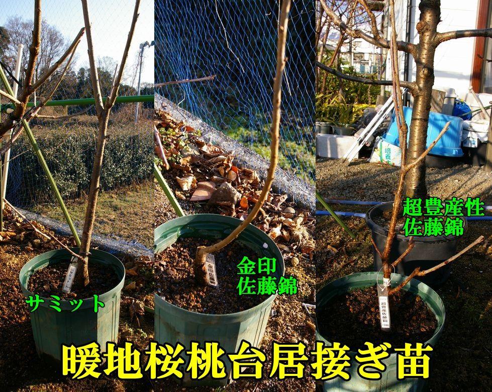 1T_kinsato0104c2.jpg