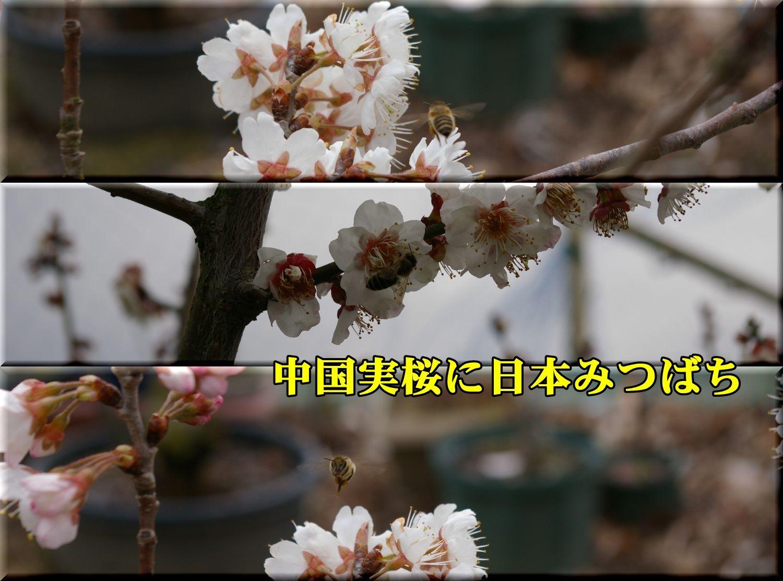 1T_mitubati0307_0c1.jpg