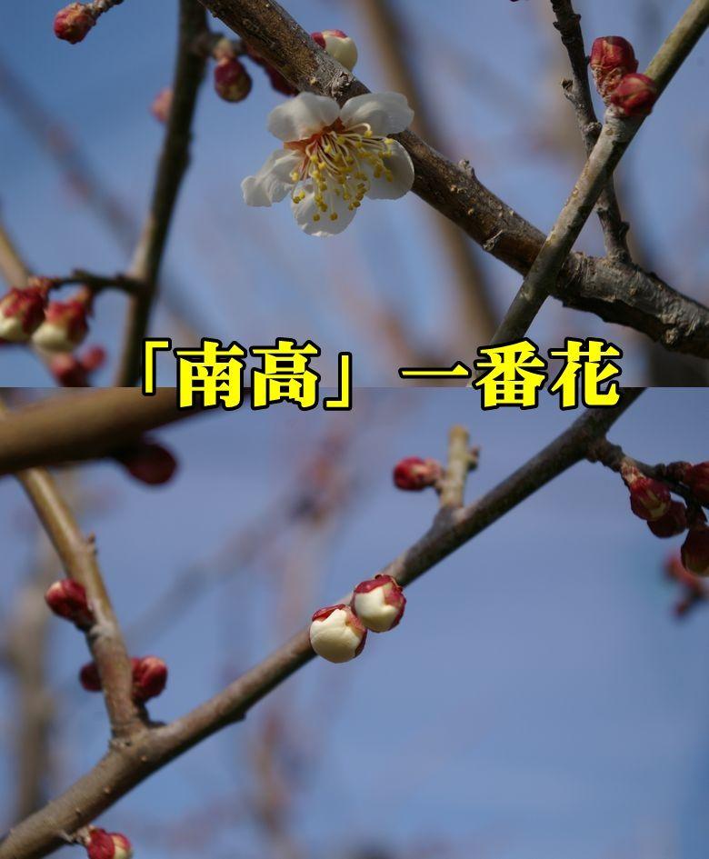 1U_nanko0216_0c1.jpg