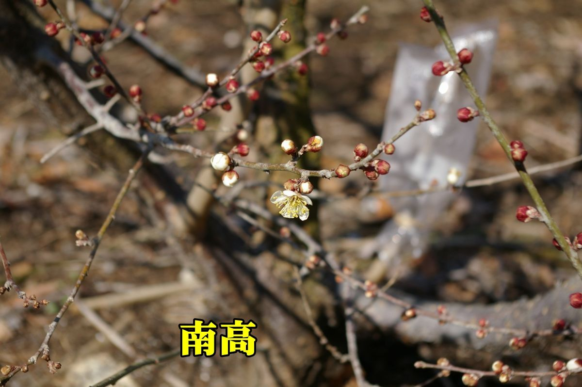 1U_nankou0220_0c1.jpg