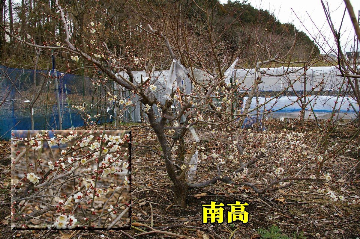 1U_nankou02c1.jpg