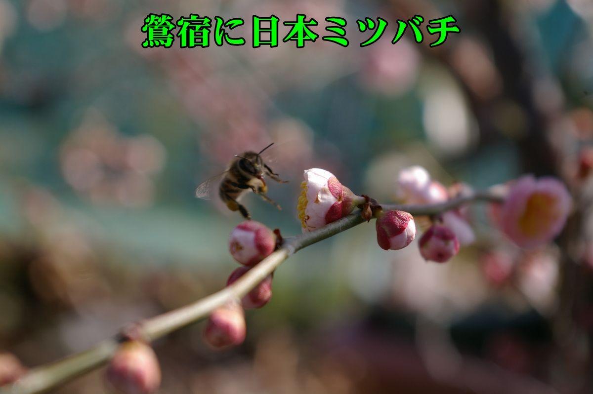 1U_ousyuku0220_0c1.jpg