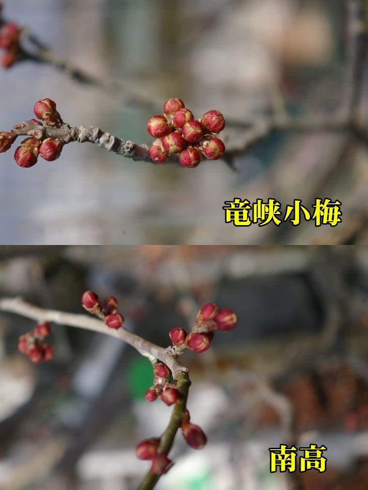 1U_ryuk_nan0207c1.jpg