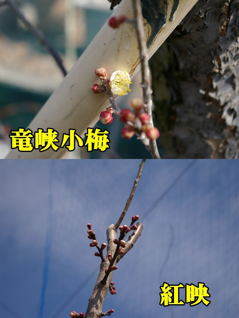 1U_ryukyou0216_0c1.jpg