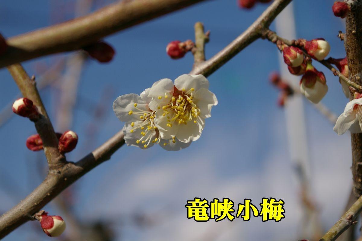 1U_ryukyou0220_0c1.jpg