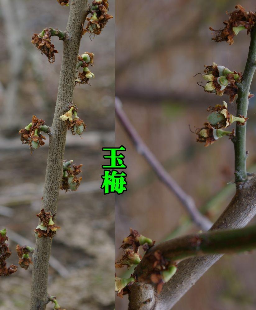 1gyokubai150401_005.jpg