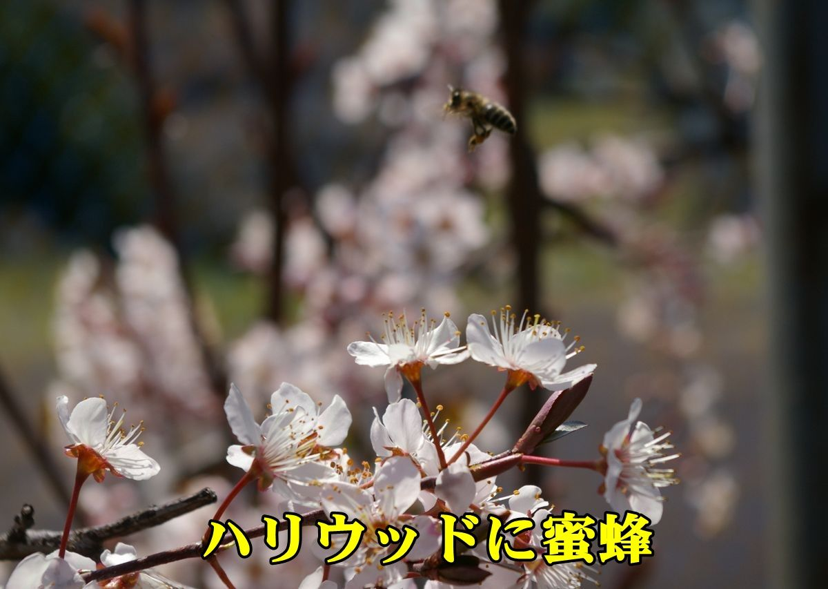 1hari_hati_009.jpg