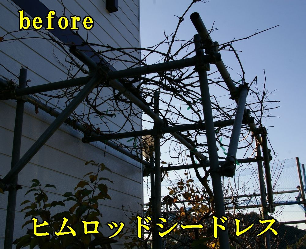 1himuro1224c1.jpg