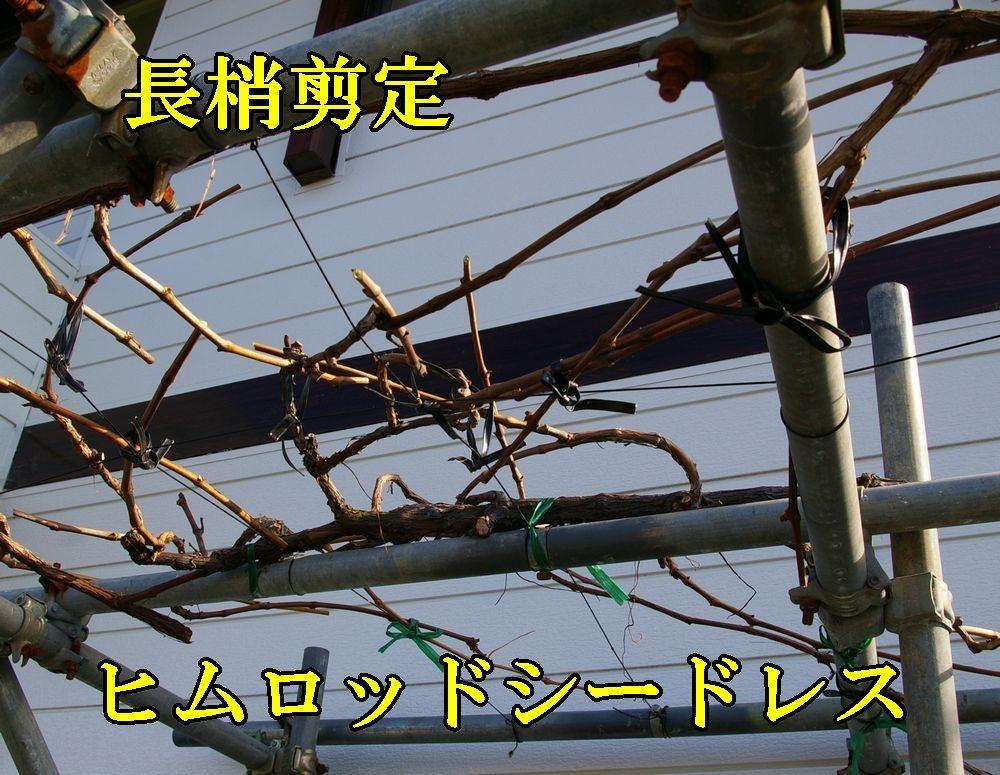 1himuro1224c4.jpg