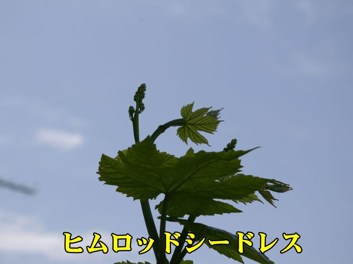 1himuroS150422_038.jpg