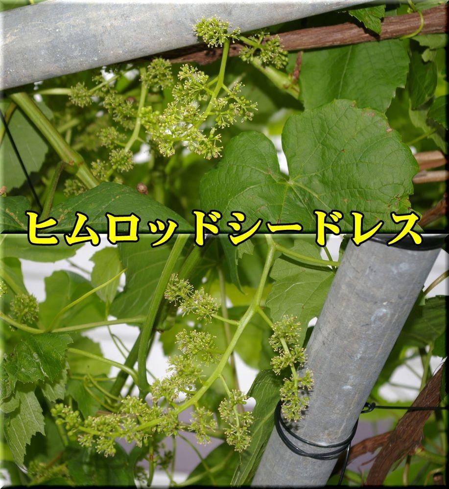 1himuroSD150520_013.jpg