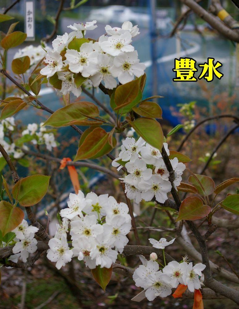1housui150404_032.jpg