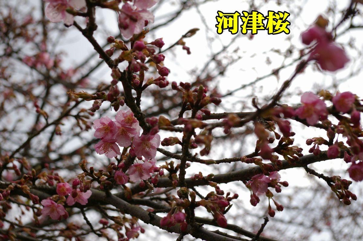 1kawadu0218_0c1.jpg