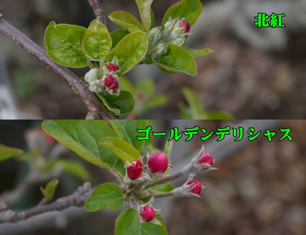 1kitaku_Gdel150331_050.jpg