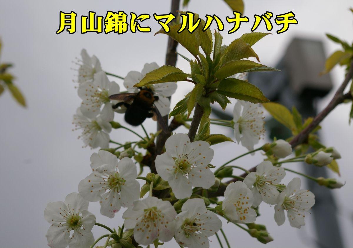 1maruhati150417_004.jpg