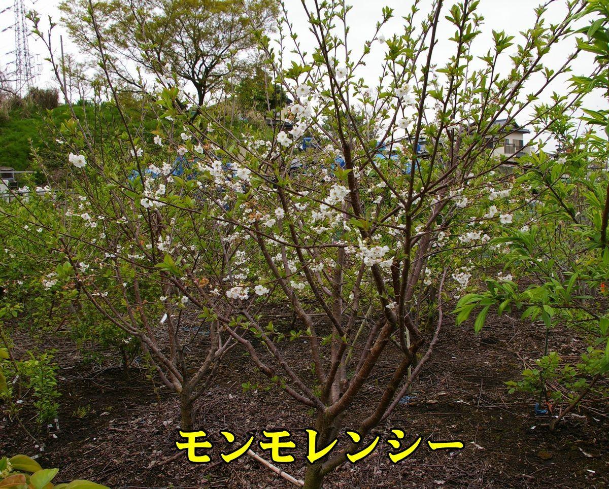 1monmoren150419_015.jpg