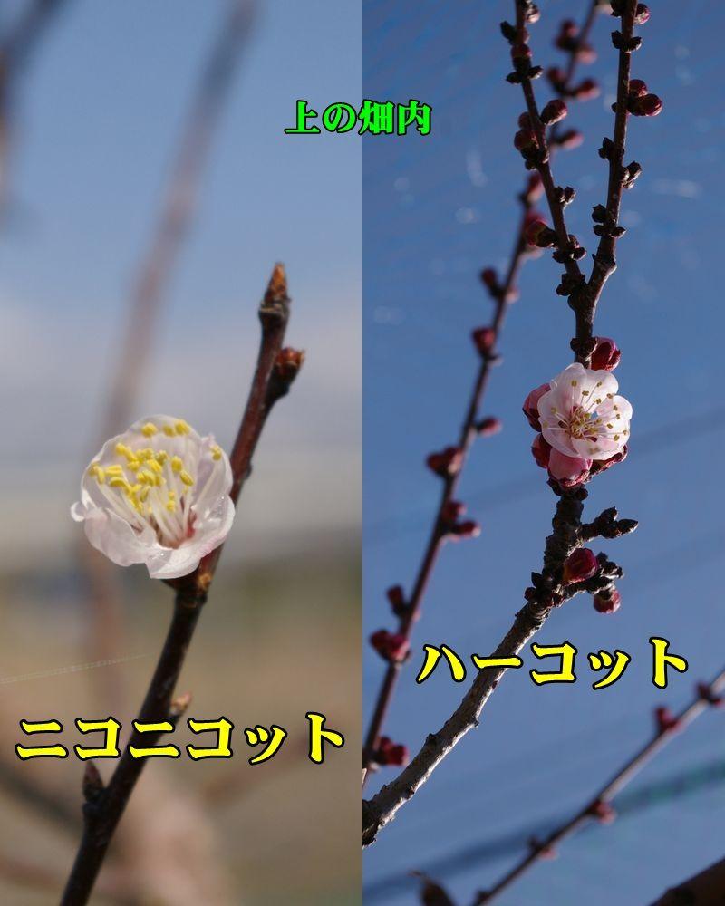 1nico_harc_013.jpg