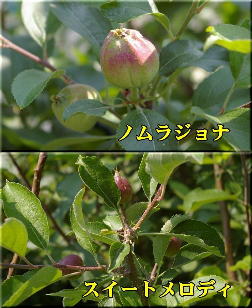 1nomuraJ_SWmelody017.jpg