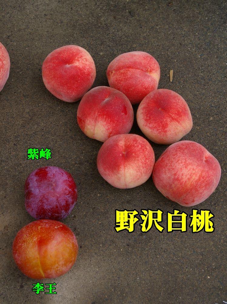 1nozawahaku150704_002.jpg