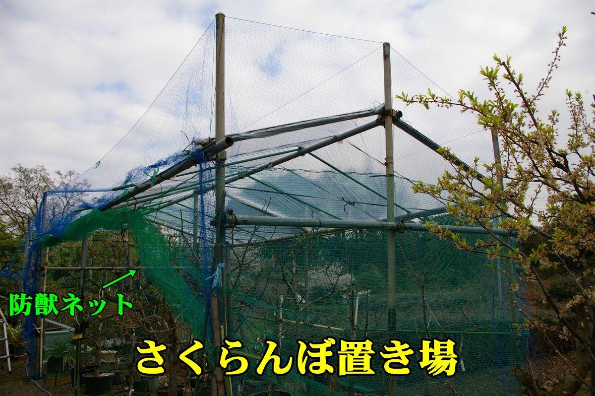 1outouameyoke150402_007.jpg