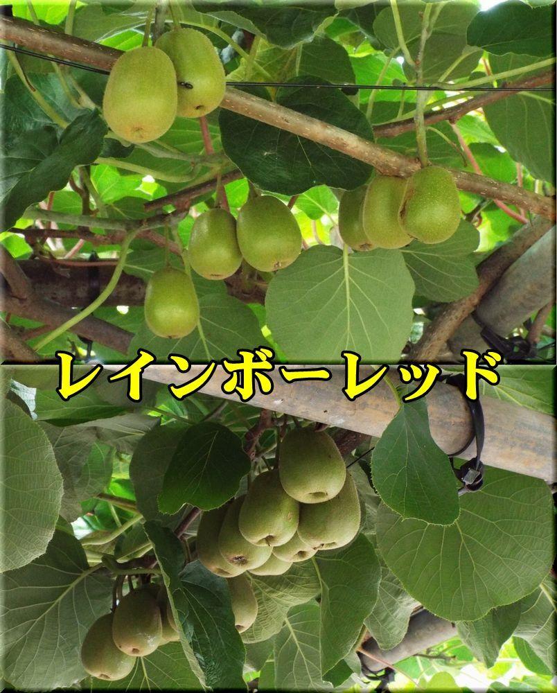 1rainbow150713_023.jpg