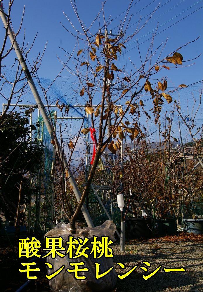 1san_m1221c1.jpg