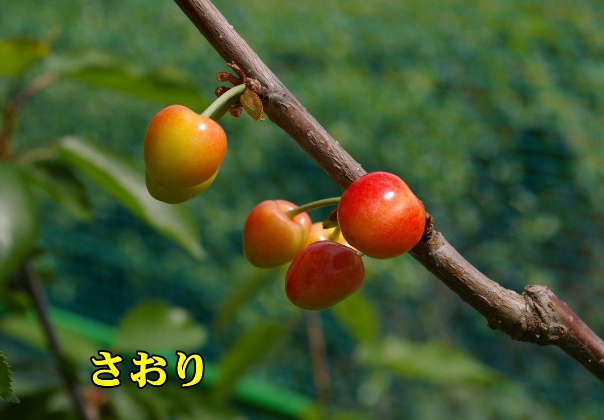 1saori150518_011.jpg