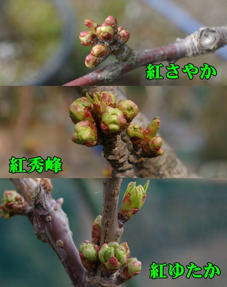 1say_syu_yut150331_027.jpg