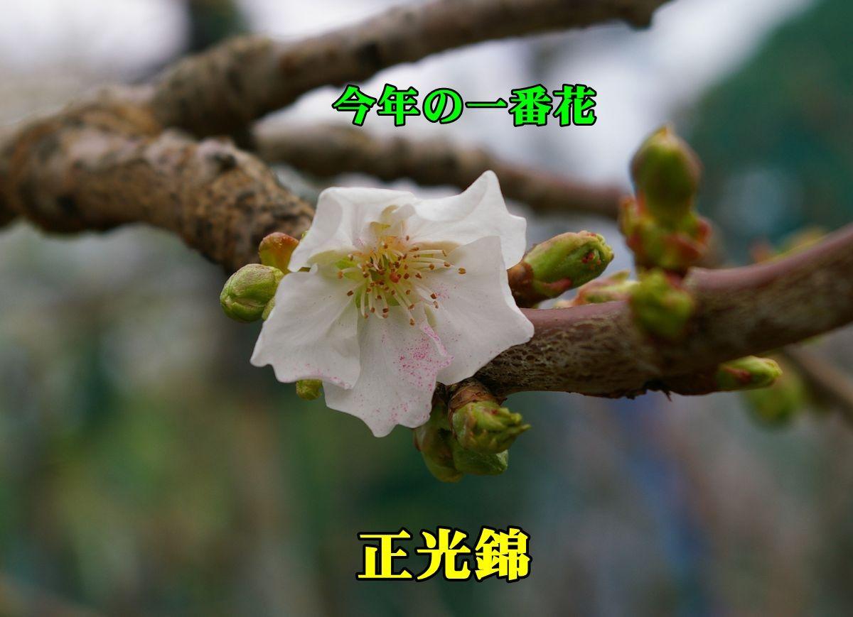 1seikounisiki150402_004.jpg