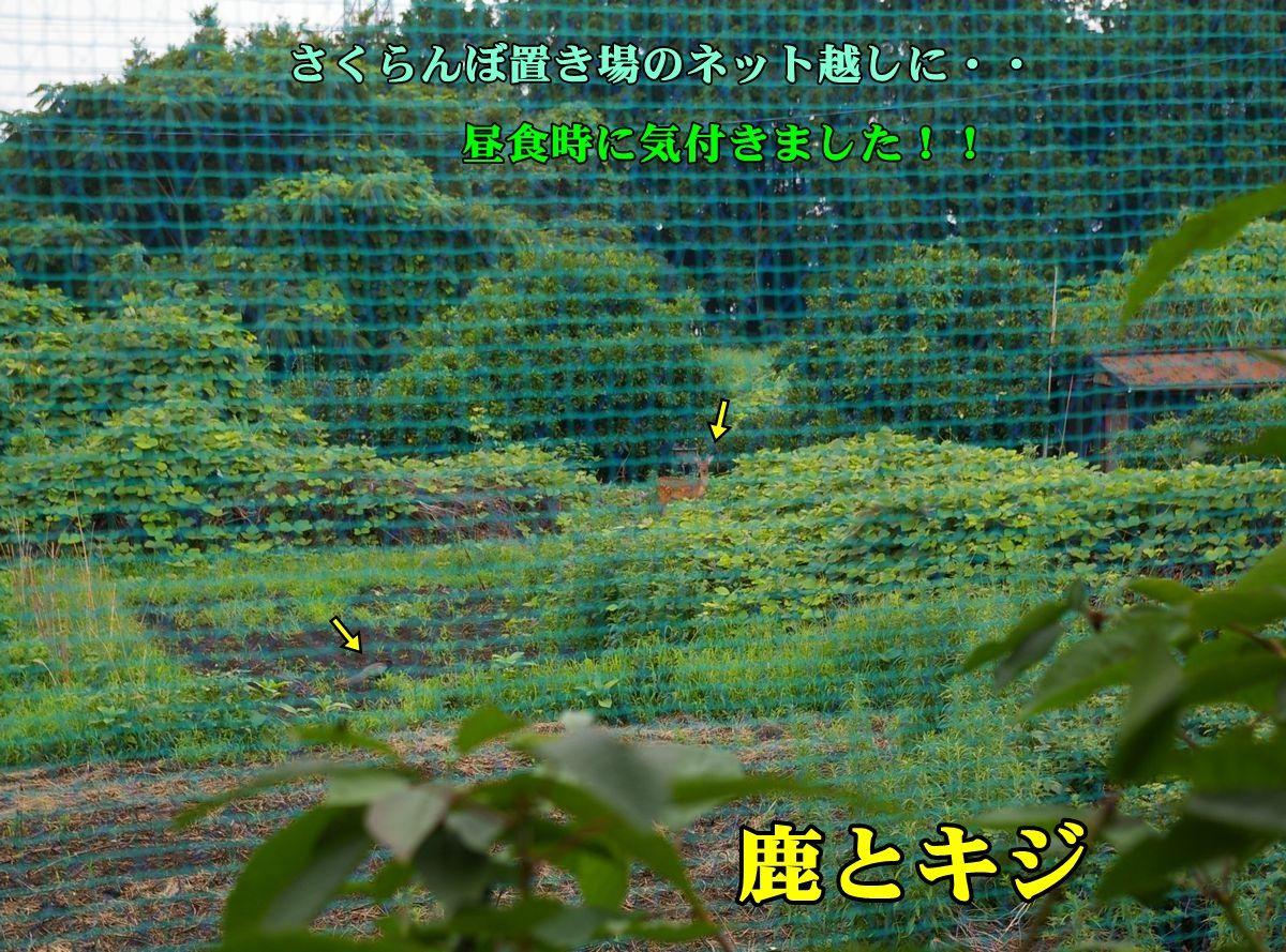 1sikakiji150707_026.jpg