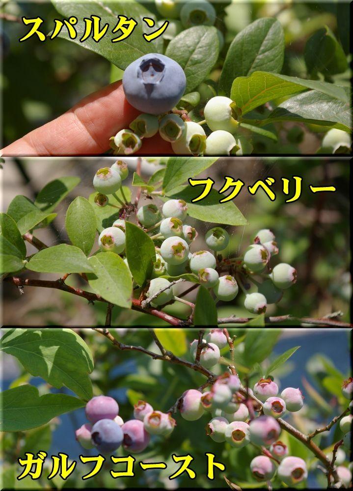 1spar_fuku_garf530_009.jpg