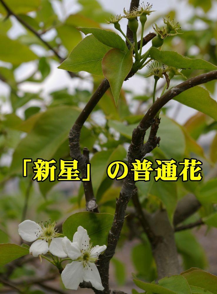1yae_sinse150417_036.jpg