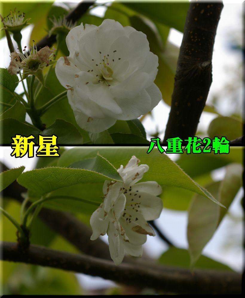 1yae_sinsei150417_032.jpg
