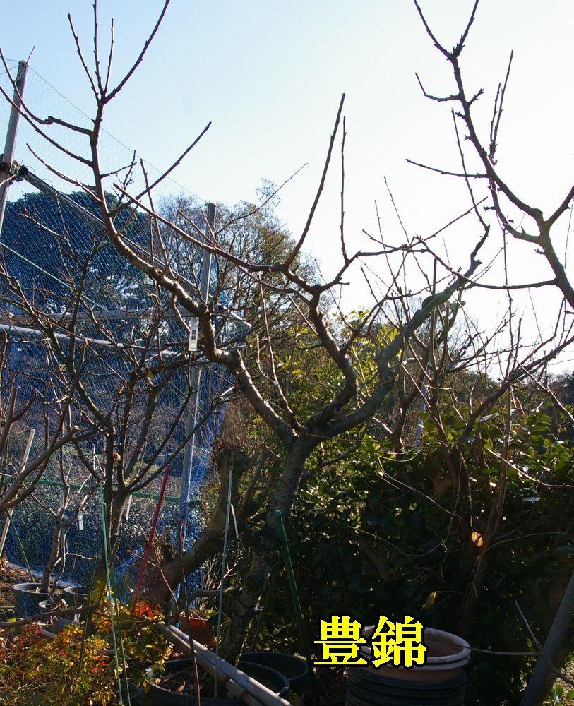 1yutaka1221c1.jpg