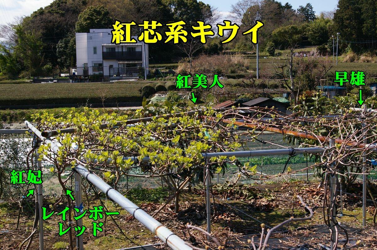 2KIUI150325_002.jpg
