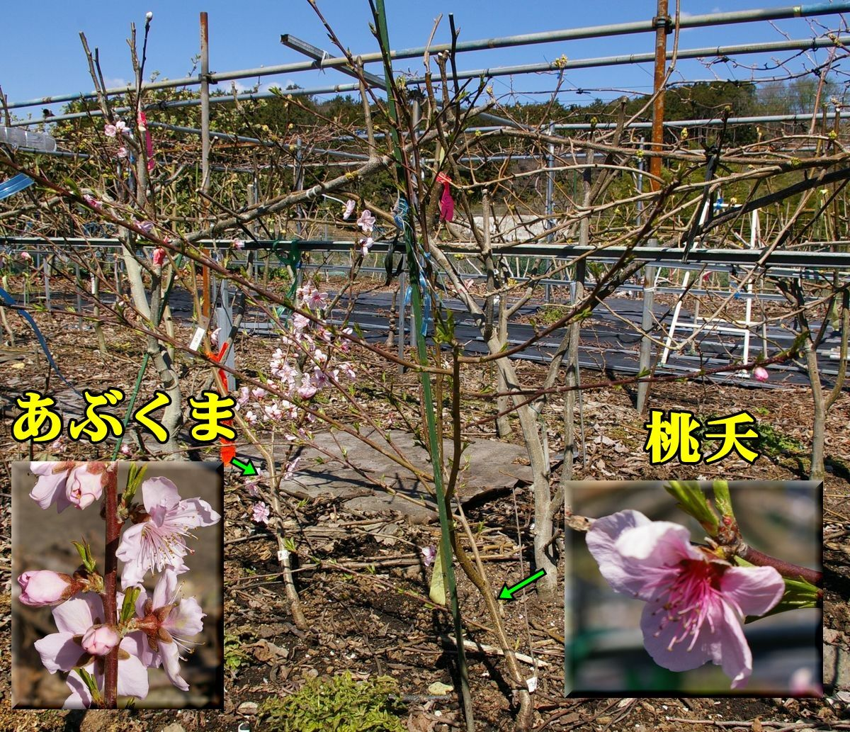 2M_toyo_abukuma150324_029.jpg