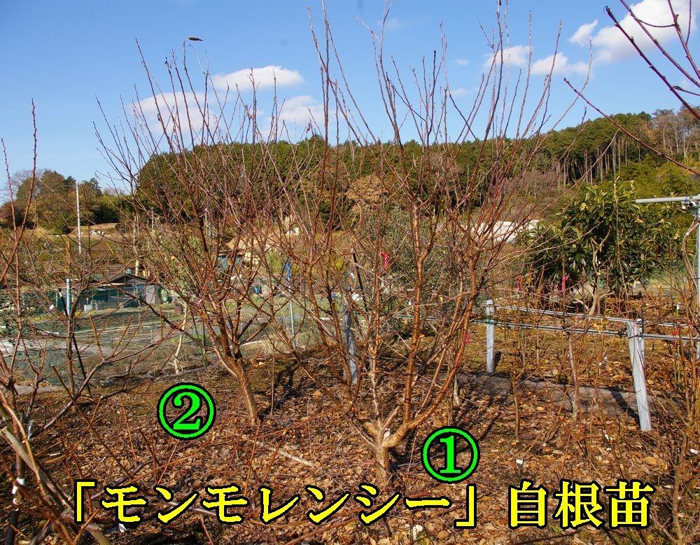 2Monmo1228c1.jpg