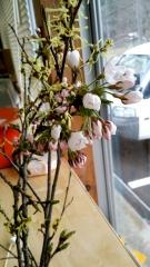 元次さん 桜